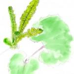 コゴミ(クサソテツの芽)
